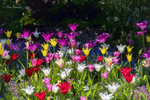 Превью spring_touch__by_phototubby-db8qjqb (700x467, 531Kb)
