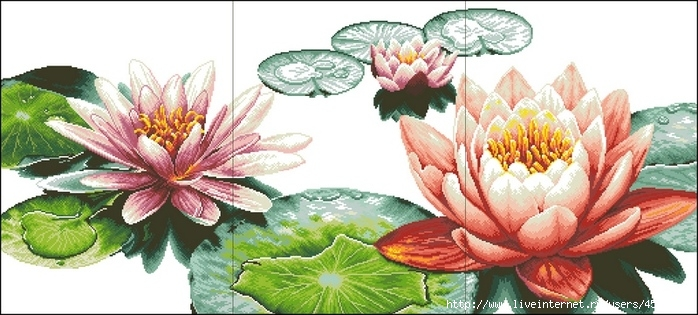 Fresh Lotuses (700x315, 191Kb)