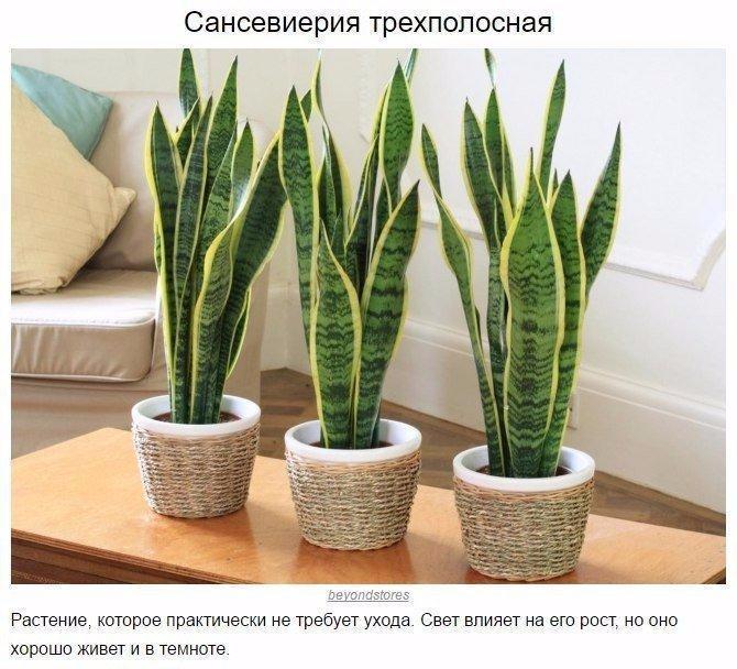 9 домашних растений для темных углов0 (670x608, 343Kb)