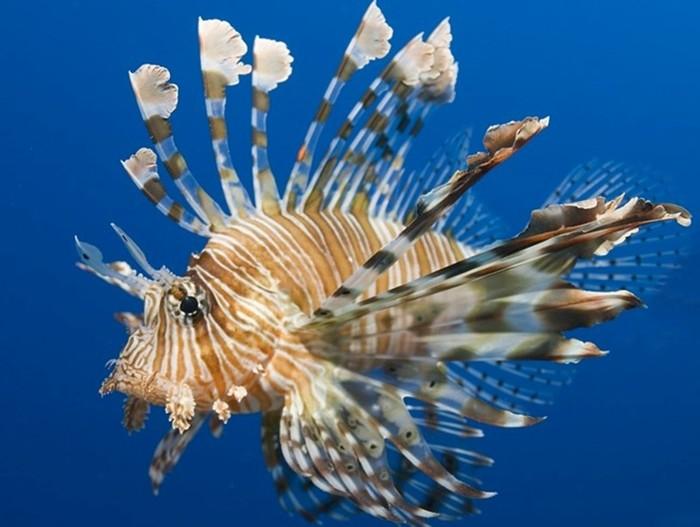 Самые необычные рыбы в мире