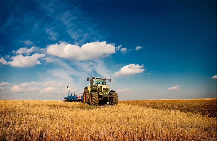 Сельское хозяйство (отрасль производства)