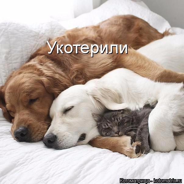 kotomatritsa_-- (604x604, 206Kb)