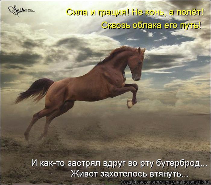 kotomatritsa_b (700x614, 404Kb)