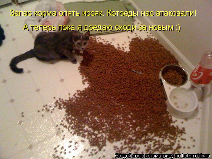 kotomatritsa_D (700x525, 378Kb)