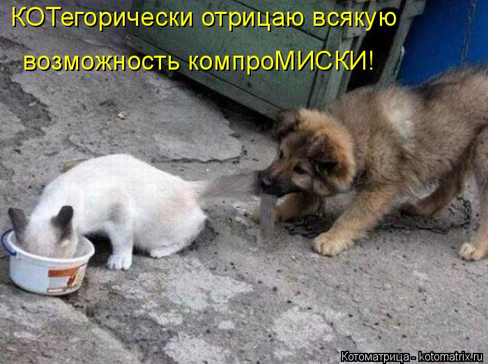 kotomatritsa_g (700x523, 303Kb)
