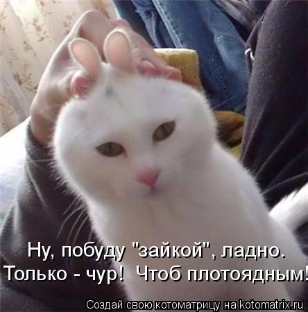 kotomatritsa_LE (444x450, 142Kb)