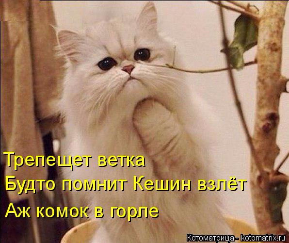 kotomatritsa_P (1) (596x501, 271Kb)