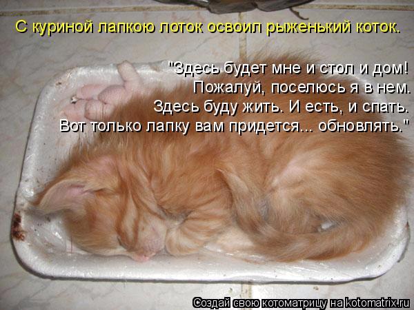 kotomatritsa_pX (600x450, 256Kb)