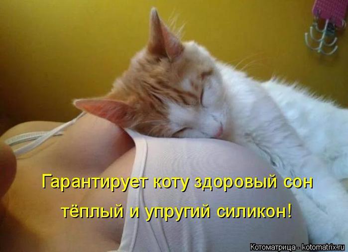kotomatritsa_qI (700x506, 292Kb)