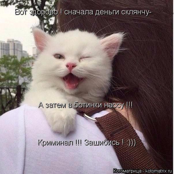 kotomatritsa_Qk (604x604, 251Kb)