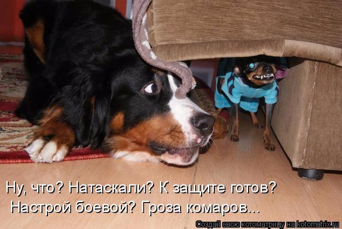 kotomatritsa_V (1) (700x468, 331Kb)