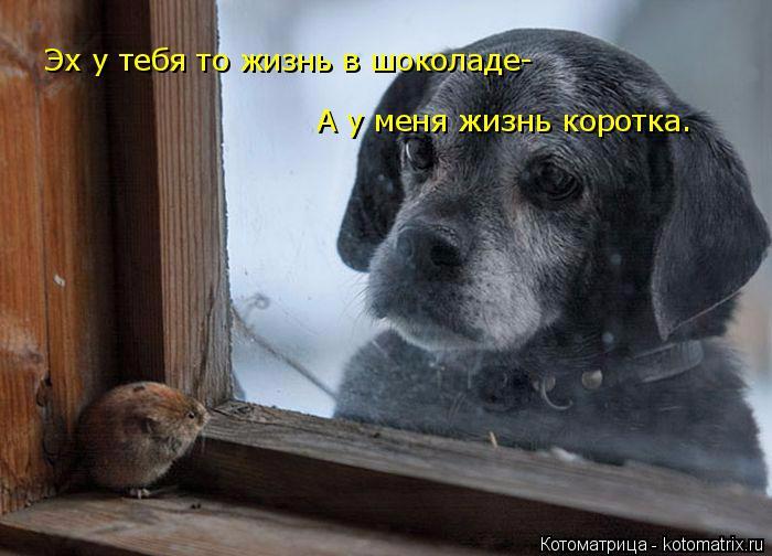 kotomatritsa_VM (700x504, 242Kb)