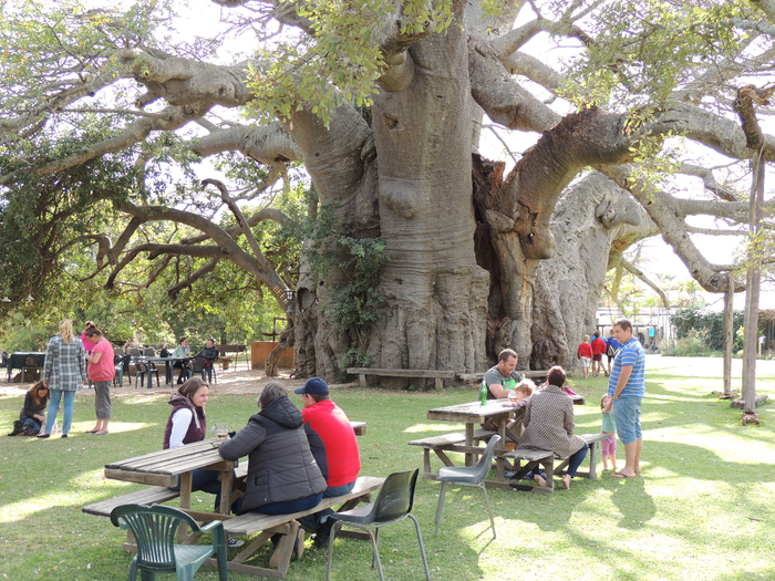паб в баобабе Big Baobab Pub 3 (700x525, 620Kb)