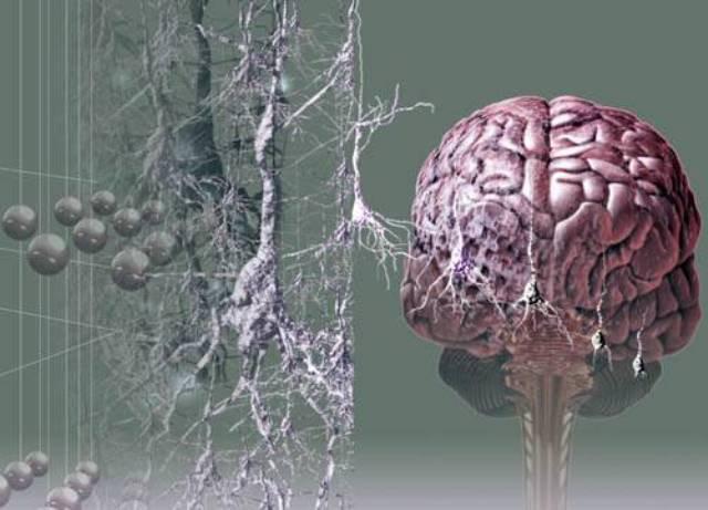 фатальная бессонница и дегенерация мозговых клеток отравлении