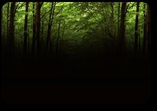 Tatiana-5-Зелёный-лес-пр (228x162, 45Kb)
