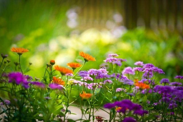 136401121_flowerfield640x427 (640x427, 250Kb)