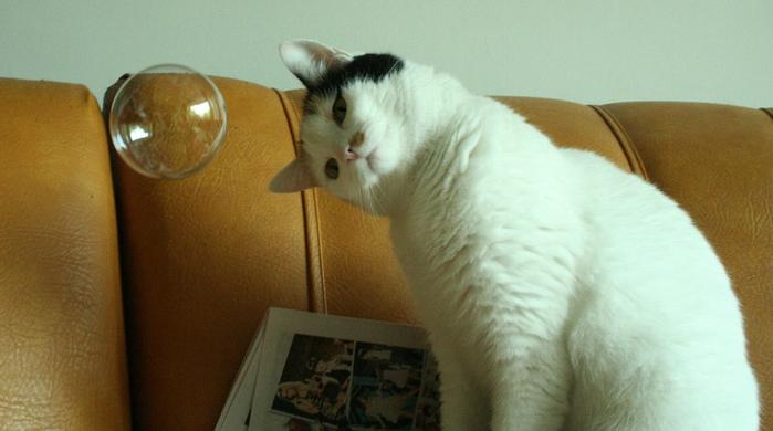 catbubble (700x390, 233Kb)