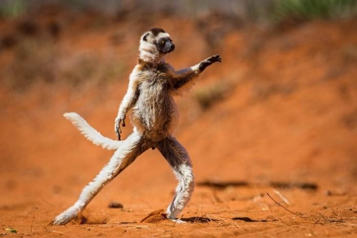 Самый смешной танцор