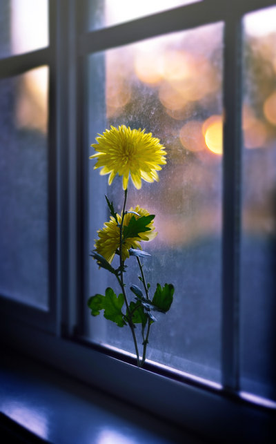window_sill_flower_by_a2star_d4zpimu (400x643, 44Kb)