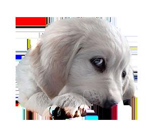 Собака4 (300x268, 99Kb)