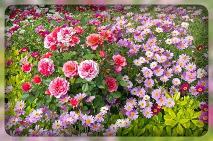 цветы (700x465, 145Kb)