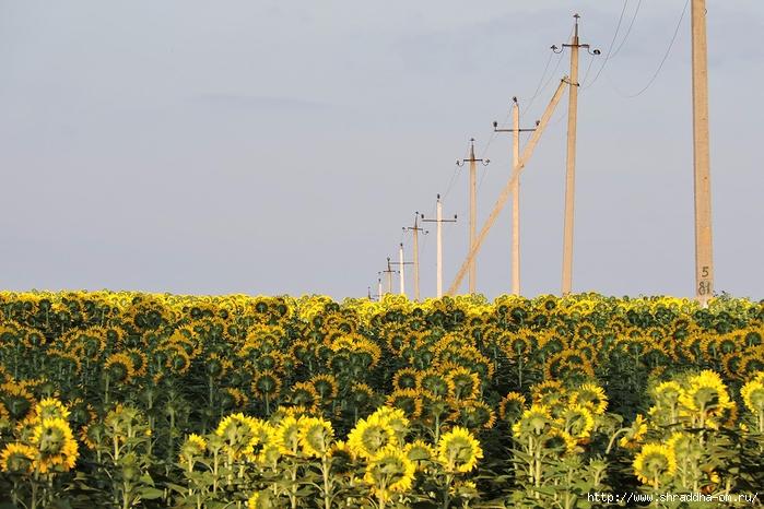 Воронеж, дача, июль (22) (700x466, 276Kb)