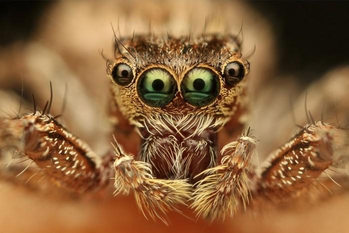 Самые необычные насекомые мира