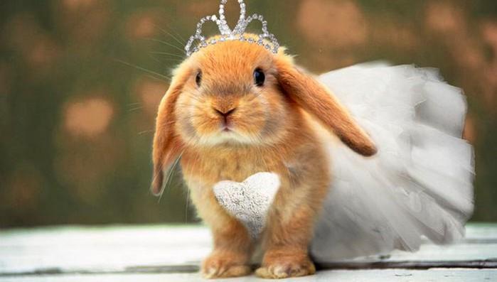 Конкурс красоты среди кроликов в Лондоне