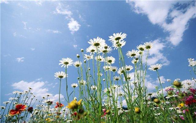 цветы мнения 1 (640x400, 237Kb)
