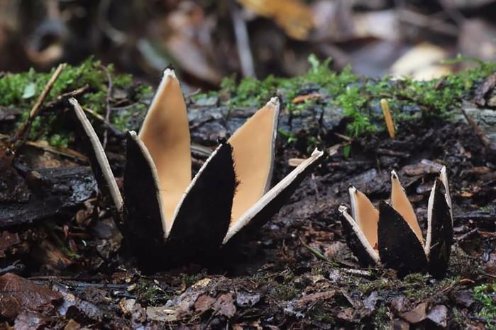 mushrooms-foto_25 (700x466, 369Kb)