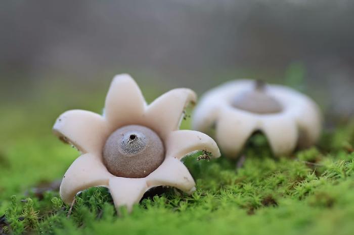 mushrooms-foto_19 (700x466, 209Kb)
