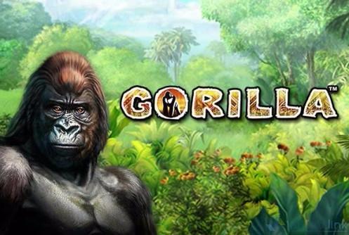 3.Gorilla (497x334, 199Kb)