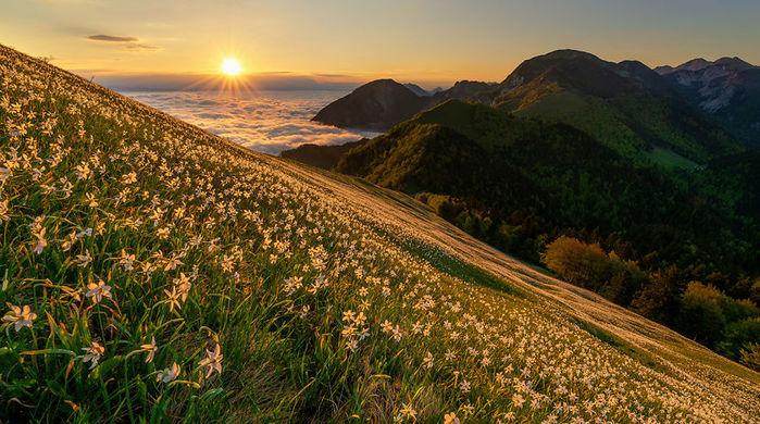 Mala-golica-daffodils-1-28-5-5933e3324e5a9__880 (700x390, 110Kb)