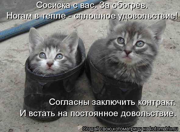 3509984_kotomatritsa_f (591x433, 48Kb)
