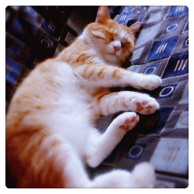 Стихи о снах коту