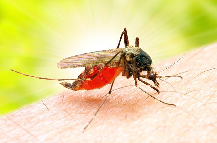 Поговорим о комарах