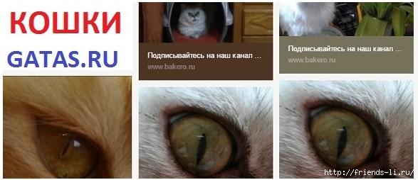Ищу друзей и подписчиков в Twitter Взаимный фолловинг в Твиттер /2178968_Gatas_ru (587x254, 97Kb)