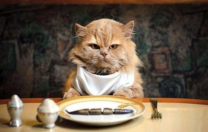 Имеют ли животные чувство вкуса? Тайные знания зоологов