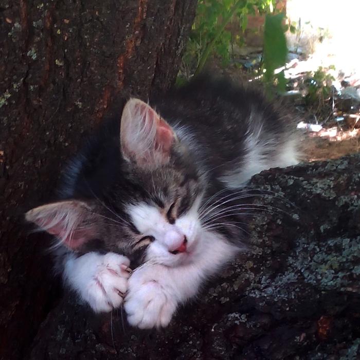 мимимишный котёнок/683232_mimimi_10laykov_700 (700x700, 337Kb)
