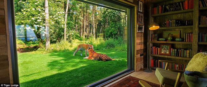 отель с тиграми в сафари парке кент 1 (700x295, 294Kb)