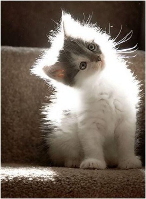 catt (515x700, 45Kb)