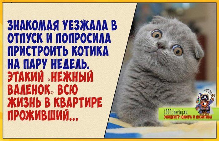 Забавный случай про изнеженного кота и защиту территории… (700x450, 80Kb)