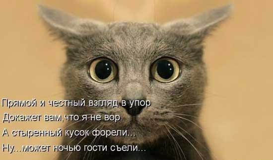 stihi_pro_kotikov_02 (550x322, 102Kb)