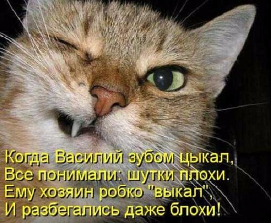 stihi_pro_kotikov_04 (550x452, 255Kb)