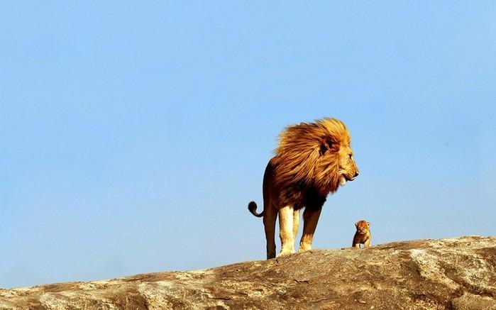 Почему львов называют царями зверей