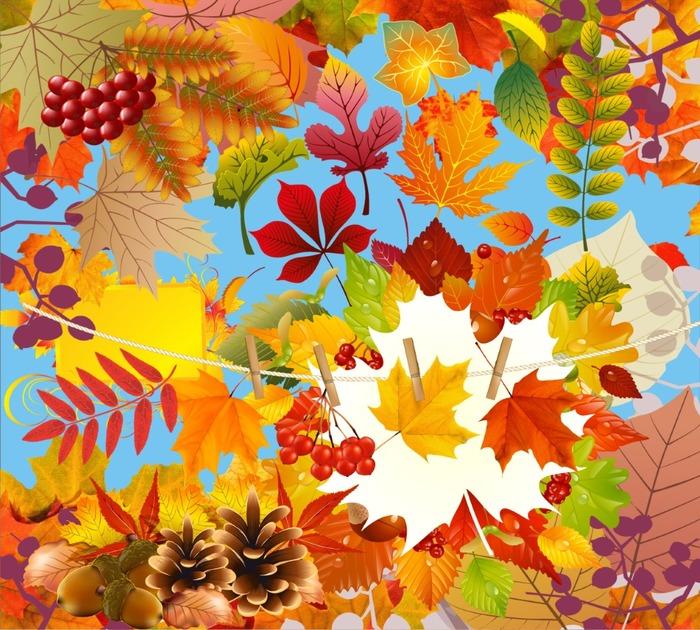 Осенние листья: клипарт на прозрачном фоне. 29 png.