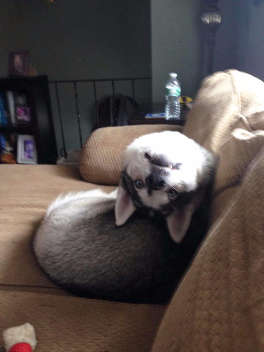 смешные фото собак 6 (524x700, 267Kb)
