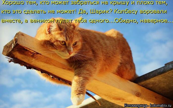 kotomatritsa__q (700x436, 375Kb)