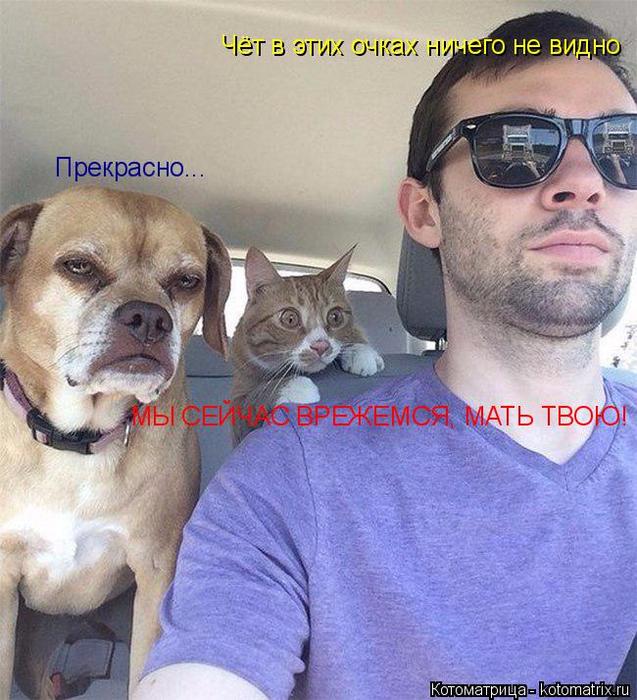 kotomatritsa_6 (637x700, 472Kb)
