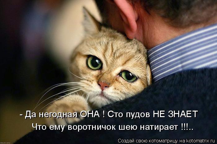 kotomatritsa_98 (700x466, 213Kb)